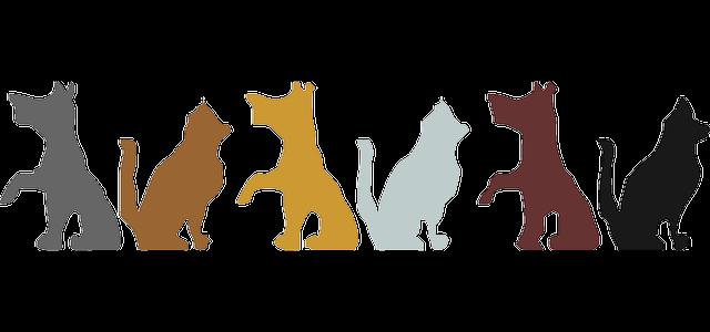 cucce per gatti e cani